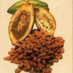 Comida Prehispánica Mexicana – EL CHOCOLATE